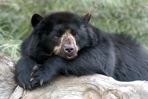 In der Ölmühle sind die Bären los