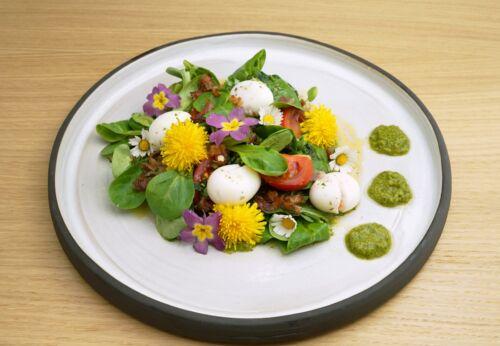 Vogerl[-]salat mit Löwen[-]zahn, Wachtel[-]ei und Trauben[-]kern-Walnuss-Dressing